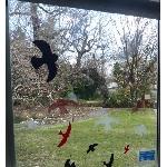 Vtáčie siluety na sklo červené 9 ks