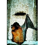 Budka pro netopýry 2F univerzální