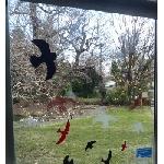 Vtáčie siluety na sklo zelené 9ks