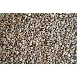 Zelená Země Konopné semínko neloupané BIO 150g