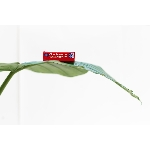 XO Kondom z přírodního latexu Ultra thin 6 ks
